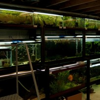Take a quick video tour of my fish room.