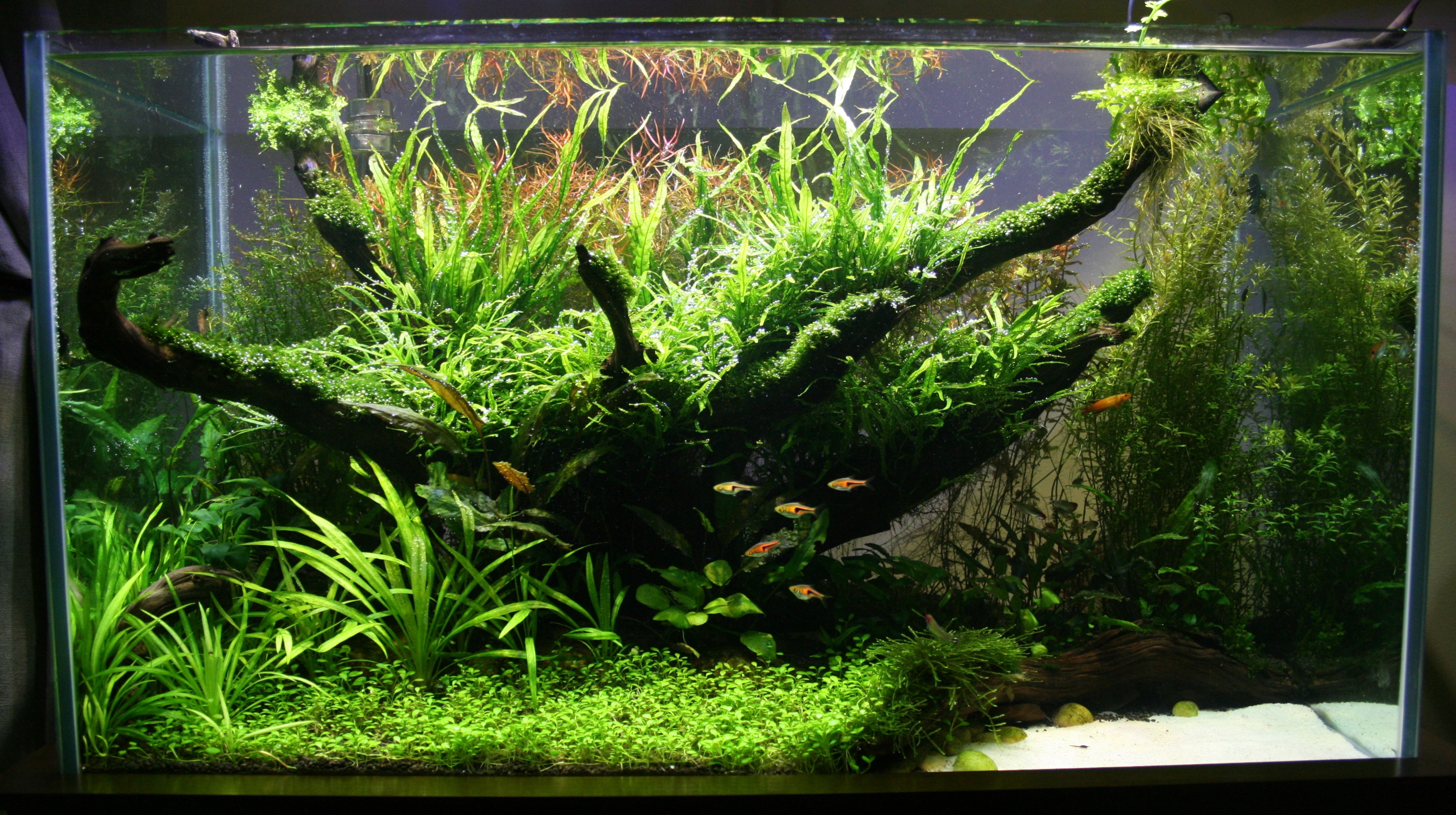 Best Aquascape : Best Aquascape - Sambhav Sankar - Invertebrates by Msjinkzd