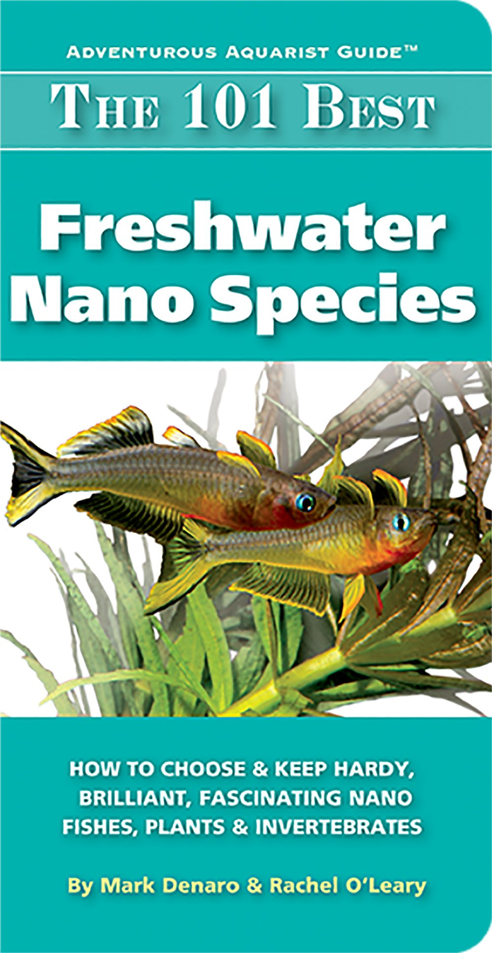 My book pic invertebrates by msjinkzd for Freshwater fish guide