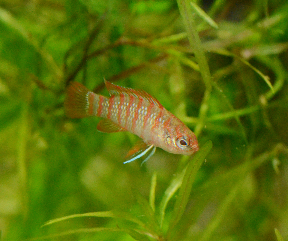 Some fish updates invertebrates by msjinkzd for Your inner fish summary